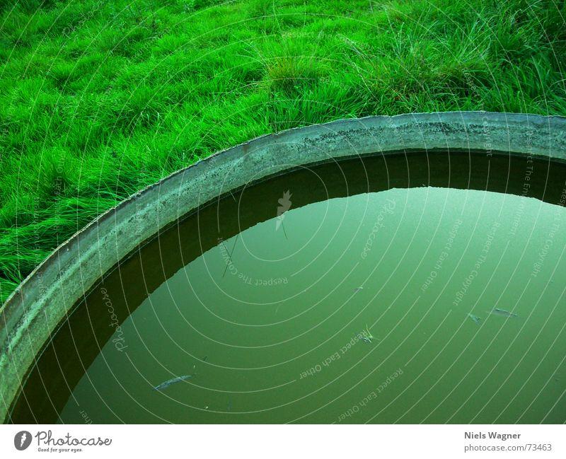 großer Trinknapf Gras Flüssigkeit Wasser Erde Bodenbelag Schatten brühe
