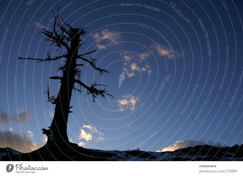 Gran lersc ite in Antersasc Lärche groß Luft tief schwarz Herbst kalt dunkel Baum trocken Wolken Alm träumen Weitwinkel Dolomiten Italien Campill Himmel hoch