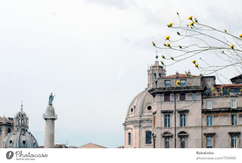 ROMA - Rooftops, Blümchen & Statuen Ferien & Urlaub & Reisen Stadt Pflanze Sommer Blume Haus Fenster Architektur Blüte Fassade Sträucher Tourismus authentisch