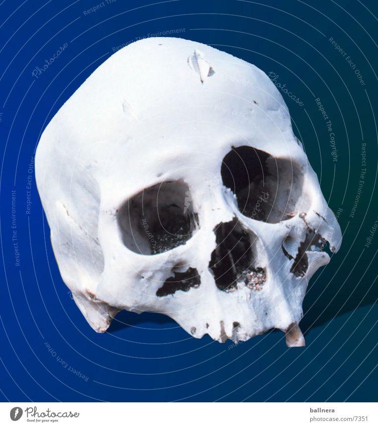 skull Dinge Paddel