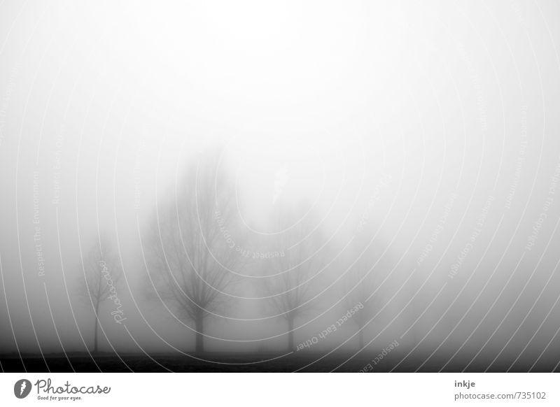 misty gang Himmel Natur Baum Landschaft Winter dunkel Wald Umwelt Gefühle Herbst Wege & Pfade natürlich Stimmung Horizont Luft Park