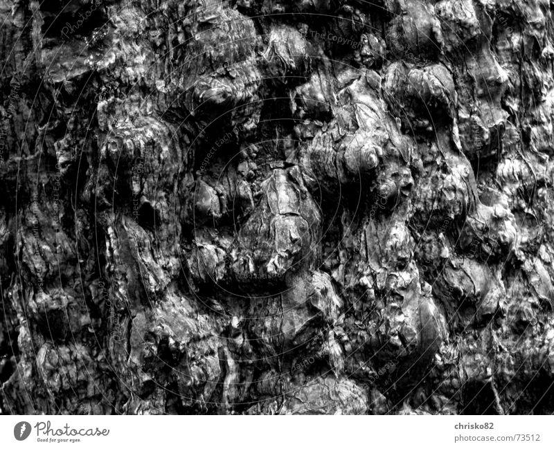 Tropische Rinde Baumrinde Urwald Hügel Kontrast Strukturen & Formen