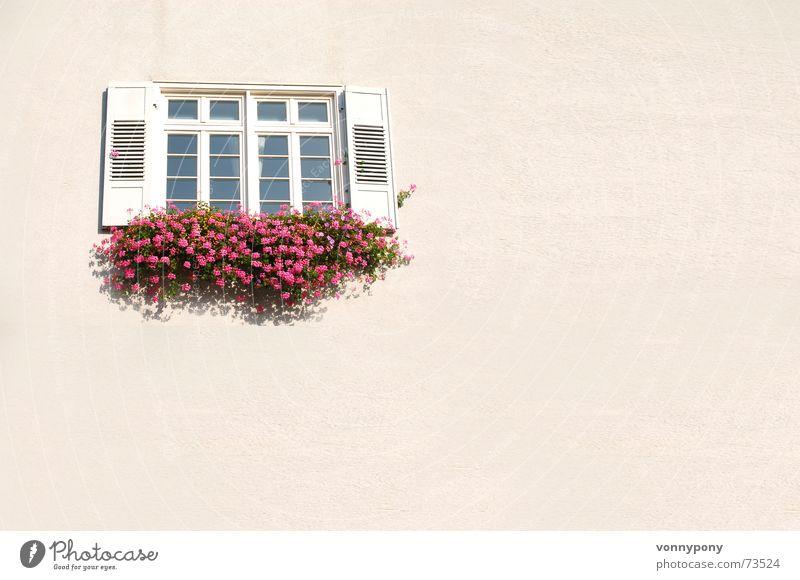 Kommst Du fensterln? weiß Blume rot Wand Fenster Wärme rosa Glas geschlossen Sauberkeit Physik Freundlichkeit Schönes Wetter Putz Fensterladen Fachwerkfassade