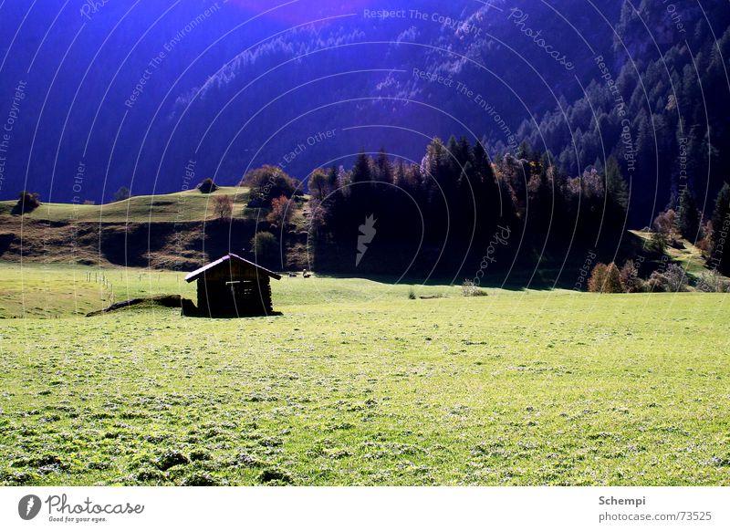 Heidis Zuhause? Sommer Wiese Alpen Idylle Kuh Hütte Farbverlauf