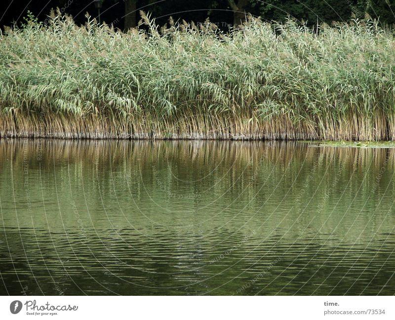 Kalte Füße Wasser Wind Gras Grünpflanze Park Seeufer Teich Zusammensein grün Zufriedenheit Bewegung Gesellschaft (Soziologie) Umwelt Wachstum Schilfrohr