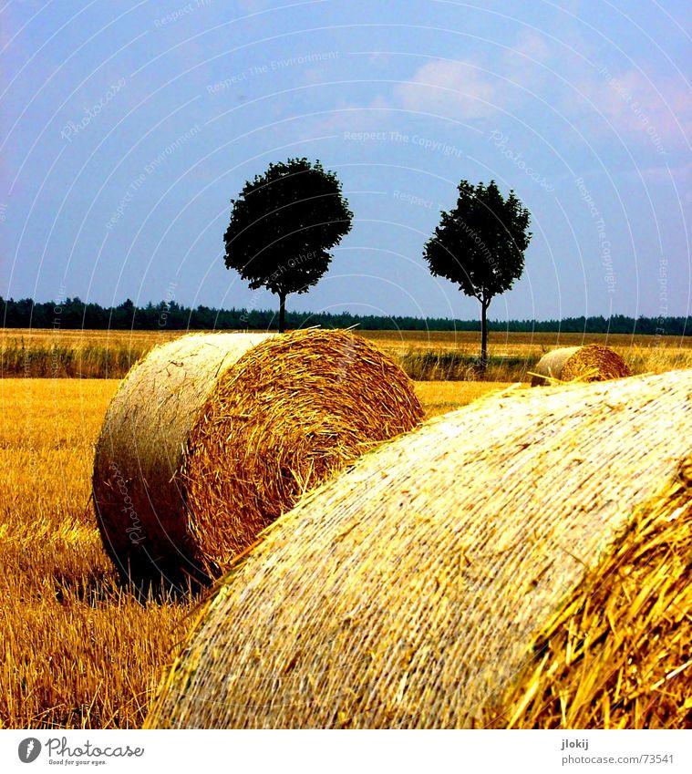 gerollt... Baum Herbst Feld 5 Romantik Stroh Rolle Futter Korn Weizen Ähren Arbeit & Erwerbstätigkeit gelb Jahreszeiten Natur Ernte Getreide Stoppel Kontrast