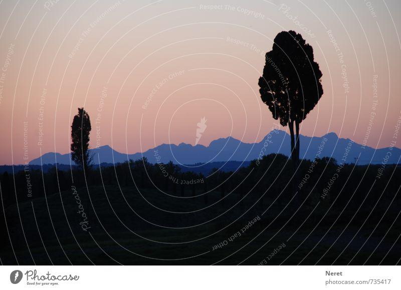 Abend in der Toskana Natur Landschaft Pflanze Sonnenaufgang Sonnenuntergang Baum Feld Kulturlandschaft Certaldo Italien Menschenleer ästhetisch blau rosa