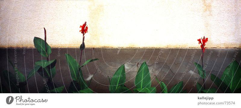 blumenbeet Natur Blume rot Wand Blüte Wachstum Blühend Beet Jubiläum Blumenbeet Gratulation