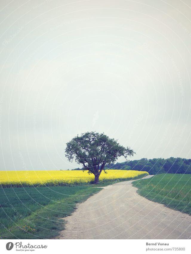 rechts vorbei Natur Landschaft Wolken Frühling Baum Gras Feld Wald Wege & Pfade gelb grau grün Raps Kies Windung Kurve einzeln Tiefenschärfe Farbfoto