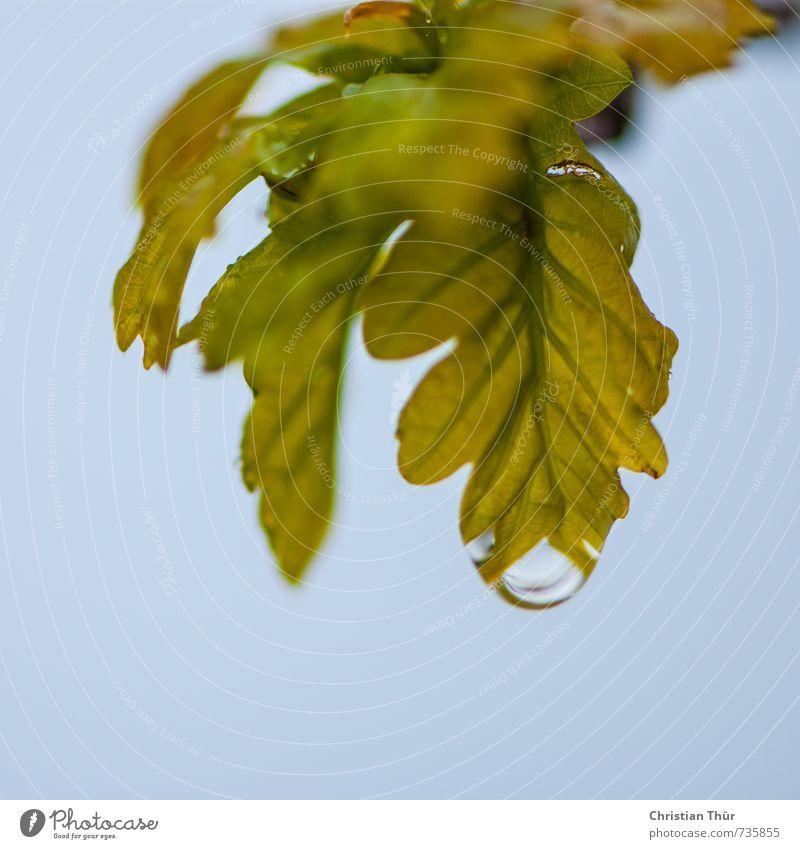Wann wird es Sommer Umwelt Natur Pflanze Tier Wasser Wassertropfen Frühling Regen Blatt Grünpflanze Nutzpflanze ästhetisch Flüssigkeit glänzend blau braun grün