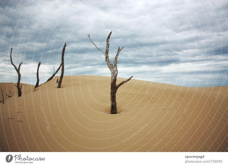 Wüstentrotz Natur blau Baum Landschaft gelb Sand gold Hügel streichen Surrealismus geduldig standhaft