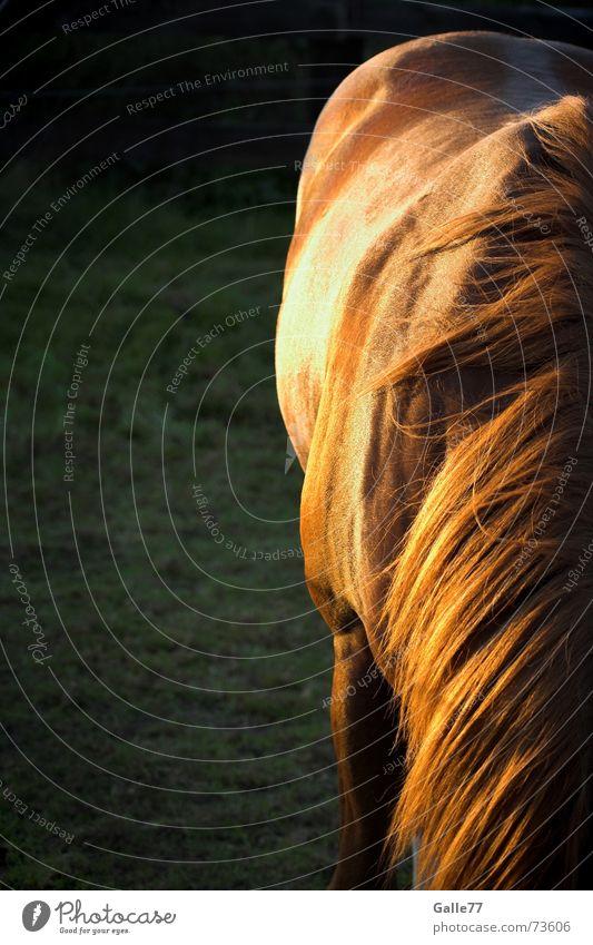 Robin´s Sonnenseite Sommer ruhig Wiese Haare & Frisuren Rücken Pferd Weide Cowboy Western Mähne
