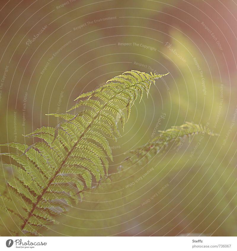400 Waldgeheimnisse Umwelt Natur Pflanze Frühling Farn Grünpflanze Wildpflanze Farnblatt grün Waldstimmung Lichtstimmung ruhig Unschärfe hellgrün zartes Grün