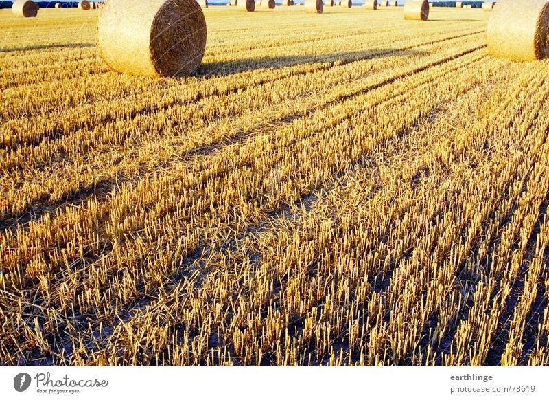 Feld am Ende Stroh Sommer gelb Strohballen Stoppelfeld Querformat analog Walze Abend tief Getreide Ernte Wärme Schatten