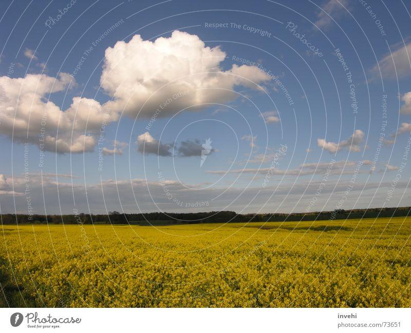 FlyAway Himmel ruhig Wolken Ferne Freiheit Feld Horizont Unendlichkeit
