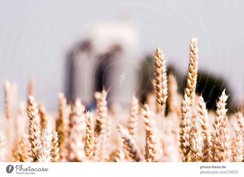 Land und Getreide Sonne Sommer Feld Bauernhof Korn Weizen Silo