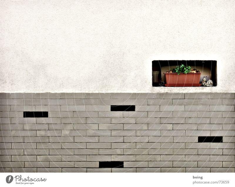 Ich wünsch dir später mal fünf von deiner Sorte Stadt schön Fenster Wand Dekoration & Verzierung Bildung USA Asien Fliesen u. Kacheln Putz Schnecke Anstreicher Efeu Deckung Hinterhalt Blumenkasten