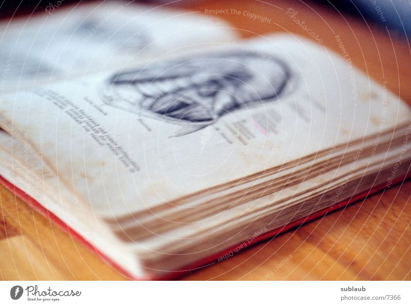Anatomischer Atlas 02 Mensch alt rot Buch historisch Anatomie