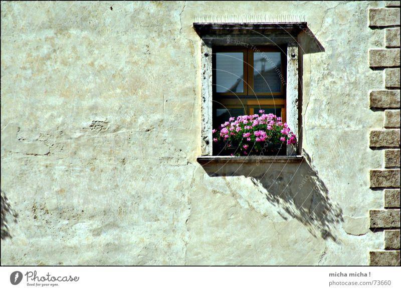 kleiner Schatten, großer Schatten Blume Fenster Blüte Fassade Italien Putz Gardasee
