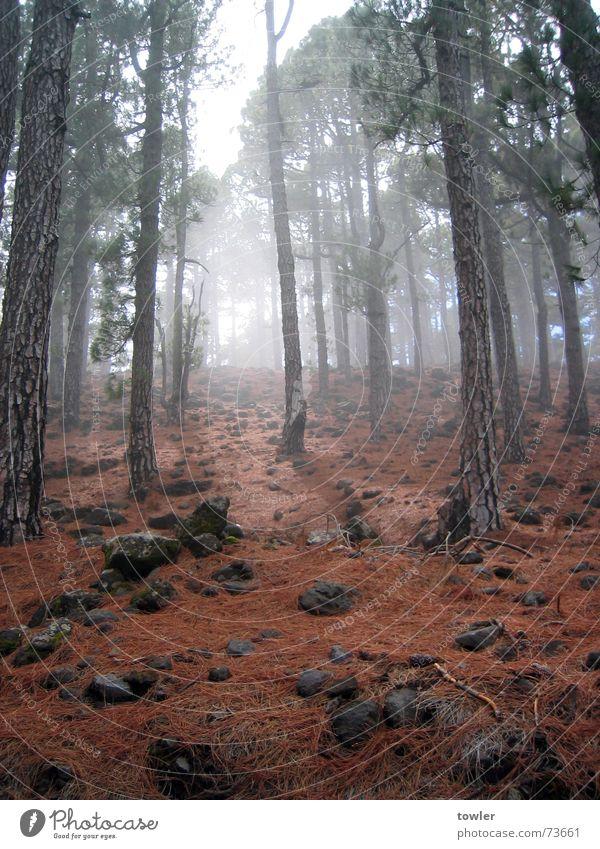 Nebelwald Natur Pflanze Baum rot Einsamkeit Wolken Wald dunkel Berge u. Gebirge Herbst Freiheit Stein Erde wandern geheimnisvoll