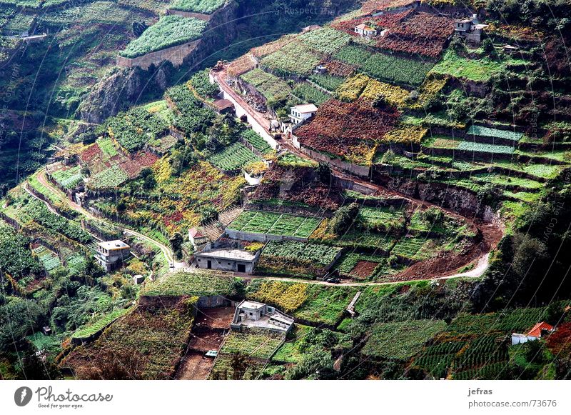 vineyard agriculture in the Madeira Island Haus wine mountains fields landscapes houses rural