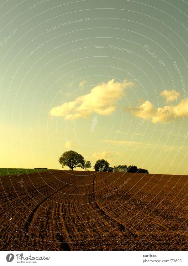 Himmel und Erde weiß Baum grün blau Wolken braun