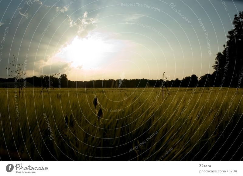 sunning field Himmel Sonne Sommer Ferne Wald Landschaft Feld Korn Kornfeld