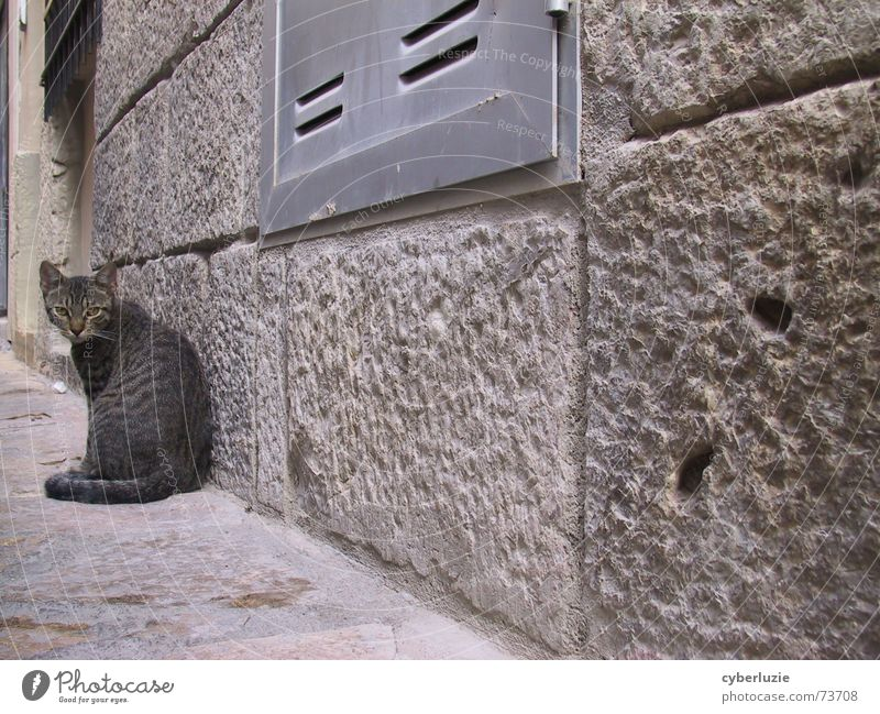 Me llamo Gozilla Katze Tier Straße Wand grau Mauer Ecke Fell Momentaufnahme Flucht