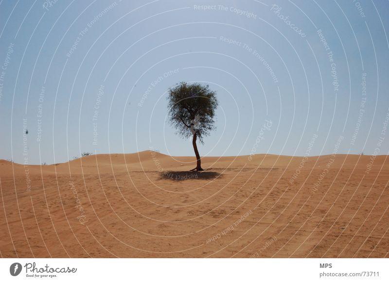 Der Wüstenbaum von Dubai Baum Physik heiß trocken Einsamkeit Pflanze Sand Wärme Himmel Landschaft Natur Schönes Wetter