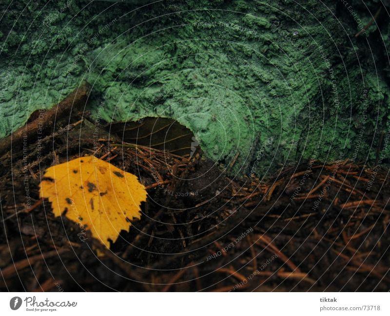 Herbstimpression Jahreszeiten Blatt Herbstlaub Waldboden Tannennadel gelb grün Baum Baumrinde ruhig schweigen mystisch Abschied Tod dunkel Einsamkeit