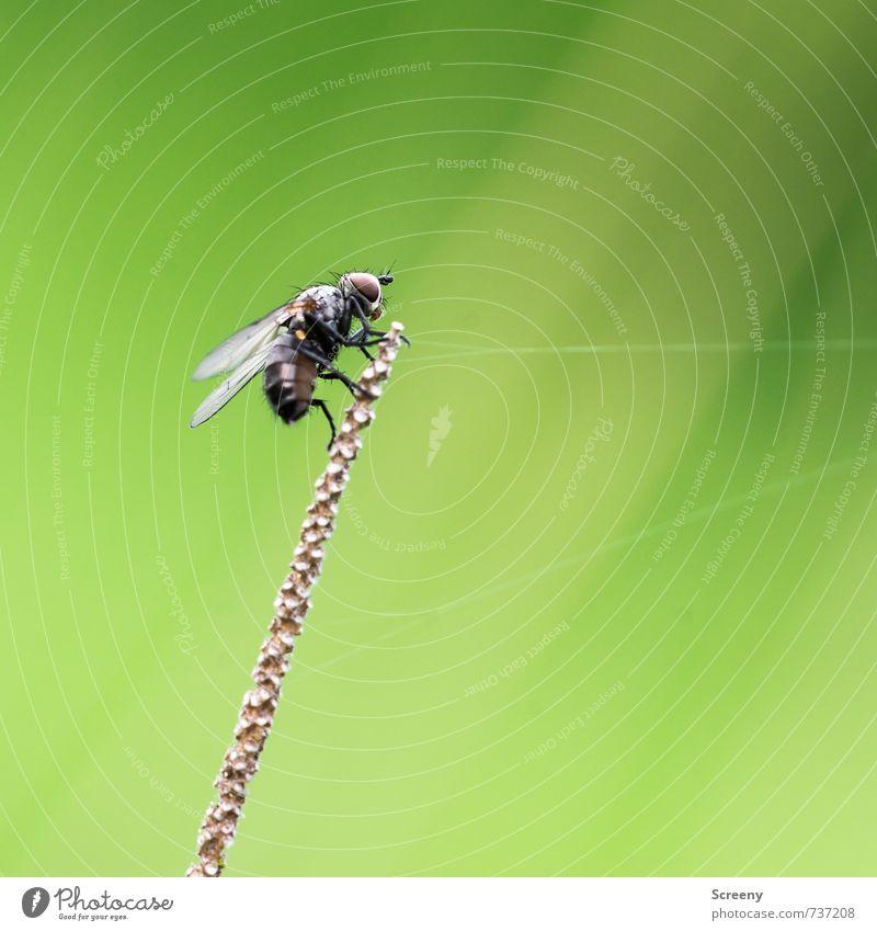 Screeny Wonder's Flying Circus Natur grün Pflanze Tier schwarz Wiese Frühling klein oben braun Feld Zufriedenheit sitzen Fliege gefährlich Seil