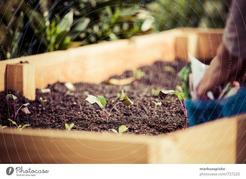 wer sät der erntet - urban gardening Mensch Frau Jugendliche Pflanze Junge Frau Hand 18-30 Jahre Erwachsene Blüte Gesundheit Garten Lifestyle Lebensmittel Frucht Häusliches Leben Haut