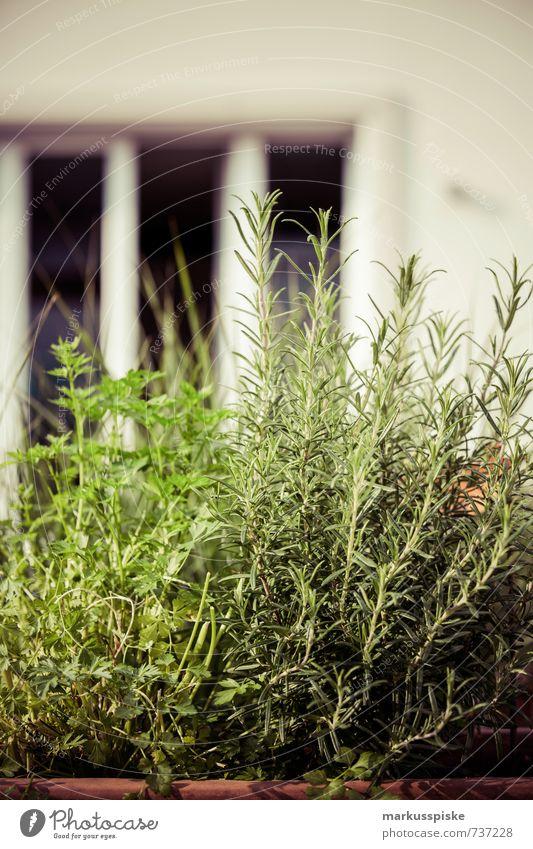 kräutergarten - urban gardening Pflanze Leben Gesundheit Essen Garten Lebensmittel Freizeit & Hobby Wohnung Lifestyle Häusliches Leben Zufriedenheit Fitness