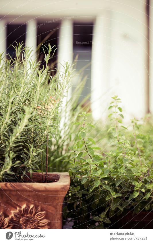 kräutergarten - urban gardening Pflanze ruhig Leben Stil Garten Lebensmittel Wohnung Häusliches Leben Zufriedenheit Blühend Lebensfreude Kräuter & Gewürze Wohlgefühl Duft Bioprodukte nachhaltig