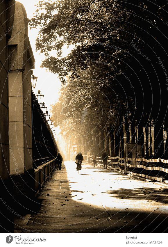 Herbstmorgen Sonne Straße Herbst Wege & Pfade Fahrrad Nebel Kreis Wien