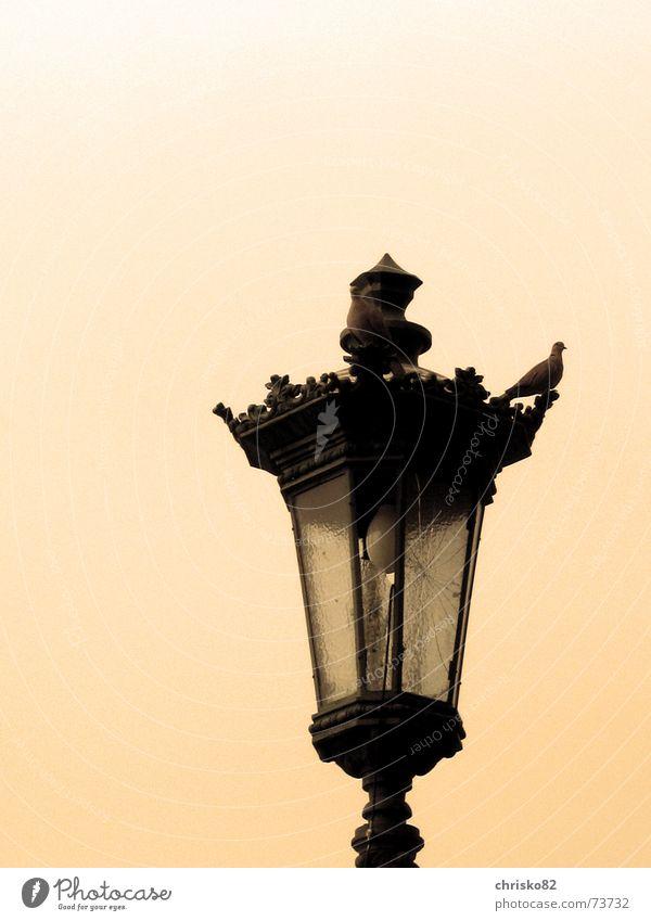 Laterne alt Lampe hell Aussicht Dekoration & Verzierung gebrochen Taube Wegweiser