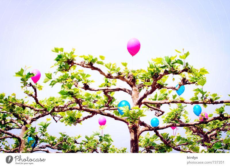 Luftballonbaum Feste & Feiern Frühling Sommer Schönes Wetter Baumkrone Platane Blatt leuchten außergewöhnlich trendy positiv schön mehrfarbig Freude