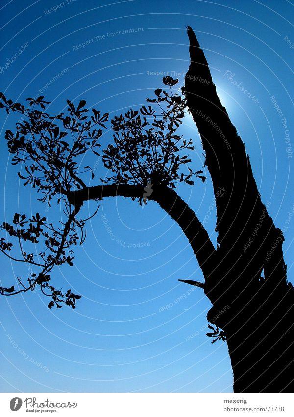 Empor ins Blaue Baum Gegenlicht blau Himmel Sonne Ast Schatten