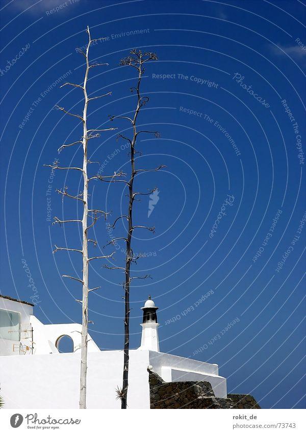 Ein Tag am Meer Himmel Ferien & Urlaub & Reisen blau weiß Wolken Fenster Mauer Insel rund dünn Stengel steil vertrocknet Ferienhaus Lanzarote