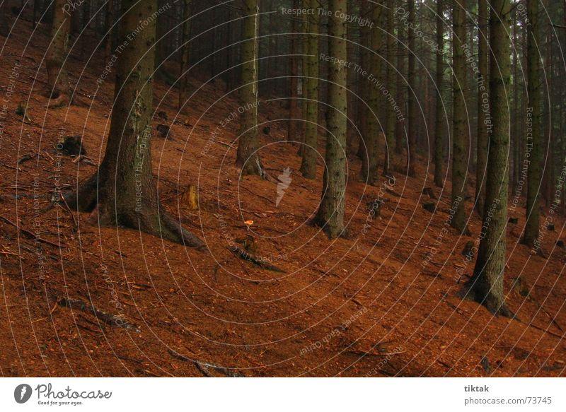 Einsamer Pilz Wald Fichte Tanne Waldboden Baumstamm Märchenwald Nadelwald Holz Monokultur dunkel braun Bergwald Berghang Ferien & Urlaub & Reisen Tschechien