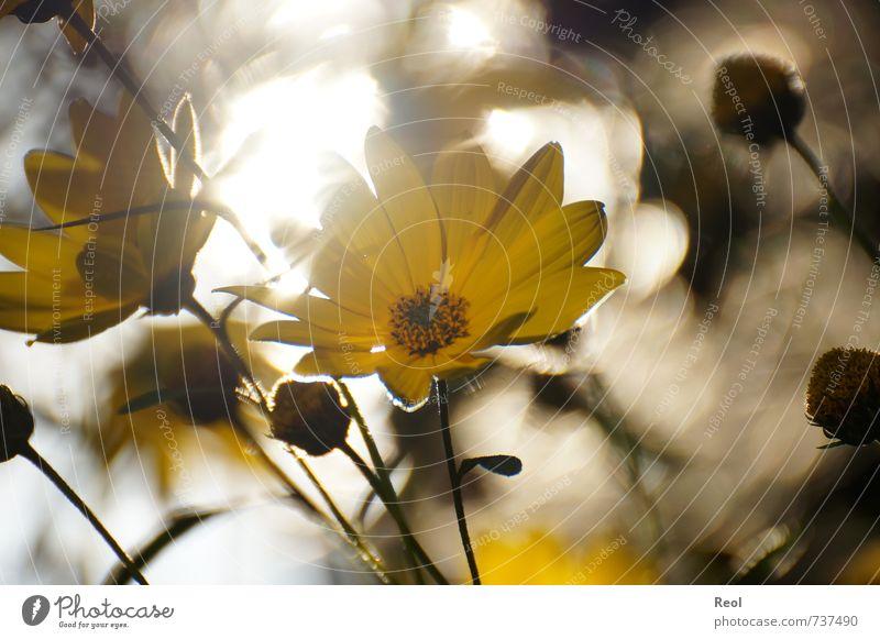 Im Abendlicht III Natur schön weiß Pflanze Sommer Blume ruhig gelb Wiese Herbst Frühling Blüte Garten träumen Park orange