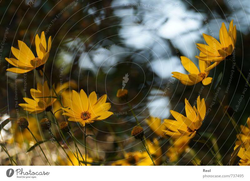 Im Abendlicht Pflanze Sonnenlicht Blume Wildpflanze Blühend glänzend Duft wild gelb gold Stimmung Frühlingsgefühle ruhig Hoffnung Fernweh Zufriedenheit
