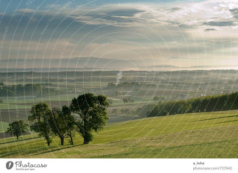 from dusk till dawn II Umwelt Natur Landschaft Pflanze Urelemente Himmel Wolken Horizont Sonne Sonnenlicht Frühling Wetter Baum Gras Grünpflanze Nutzpflanze