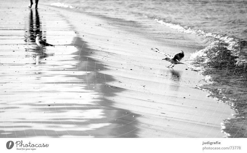 Strandleben Möwe Vogel Reflexion & Spiegelung Wellen Gischt Brandung See Meer Ferien & Urlaub & Reisen schwarz weiß Spaziergang Wasser Ostsee Erholung laufen