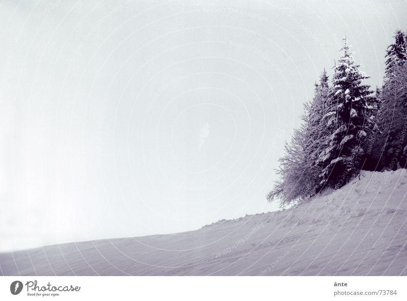 hörst du die stille? Klirren kühlen Winter Tanne Schnee kalt ruhig Eis frisch wandern Wald Hügel Baum analog Himmel Nadelwald Gelassenheit Schwarzweißfoto