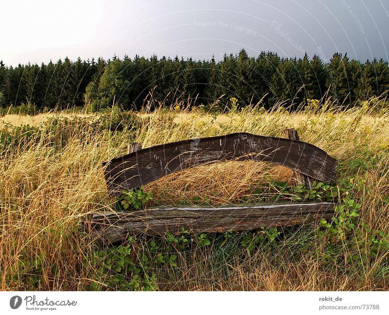 Im Wald und auf der Heide, verlor ich Kraft durch Freude.... Himmel Baum Sommer ruhig Wolken Einsamkeit gelb Wiese Gras Holz wandern Wind gold sitzen Pause
