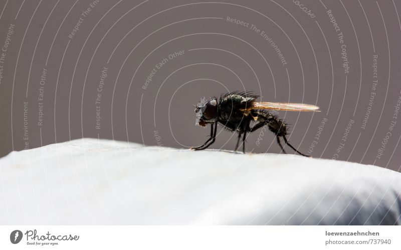 1000 Facetten Natur weiß ruhig Tier schwarz Frühling grau natürlich außergewöhnlich braun Behaarung Wildtier Fliege warten Schönes Wetter Zaun