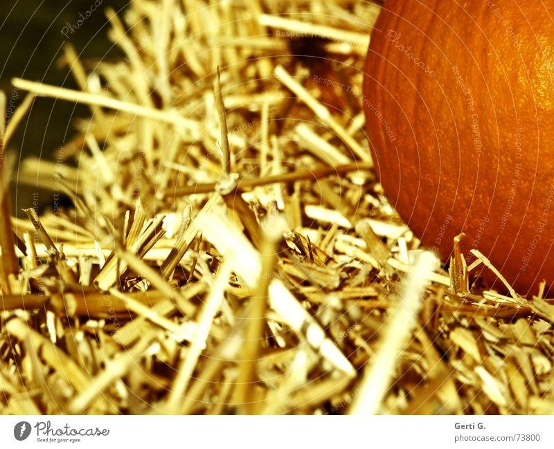 so stroh Gesundheit orange Lebensmittel Ernährung Dekoration & Verzierung Landwirtschaft Gemüse Bauernhof Halm Halloween Stroh Futter Kürbis Strohballen