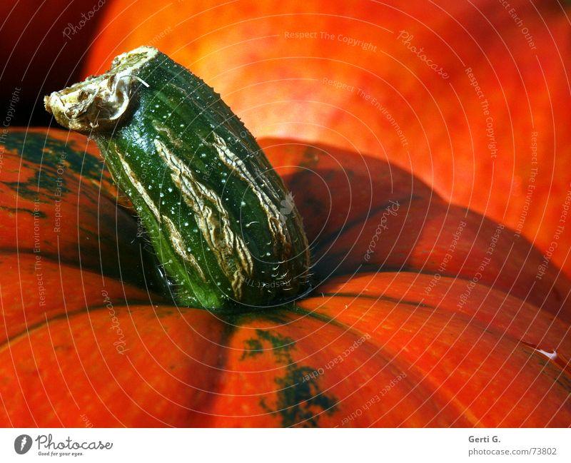 feststecken Stengel Gemüsesuppe Kürbissuppe grün Lebensmittel Gesundheit Halloween Ernährung Kürbiskern Landwirtschaft Kürbiszeit Herbst Fett orange