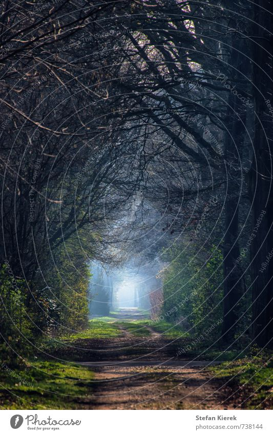 Am Ende des Tunnels Joggen Umwelt Natur Landschaft Erde Luft Frühling Schönes Wetter Nebel Baum Allee Wege & Pfade Tunnelblick Tunneleffekt Bewegung gehen